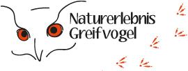 Naturerlebnis Greifvogel